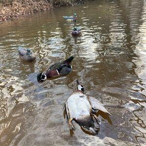 2 dead ducks